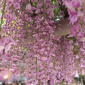 1f81e0b4d Shop for Garden Plants   Garden   Home & Garden   online at Kaleidoscope